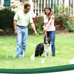 pet fence flags petsafe