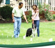 pet-fence-flags-petsafe[1]