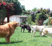 pet-fence-dogs[1]